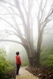 Na névoa grossa imagens de stock