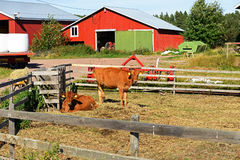 Na nabiału gospodarstwie rolnym Obraz Royalty Free