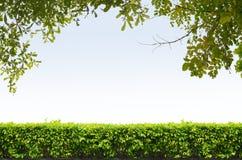 Na niebieskim niebie krzaka ogrodzenie zdjęcia royalty free