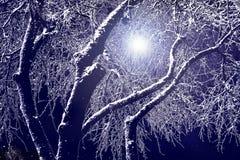 Na noite na perspectiva de um céu escuro, silhuetas do sn Foto de Stock
