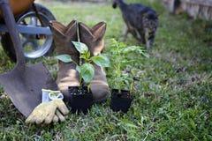 na ogród organiczne obraz stock