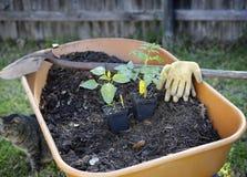 na ogród organiczne zdjęcia stock