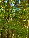 NA ono Hdr pająk siecią w lesie jest Zdjęcie Stock