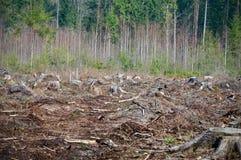 Na Ontbossing stock afbeeldingen