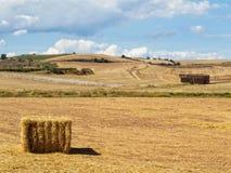 Na oogst - Ciruena stock foto