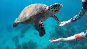 Na PÁGINA de Filipinas que mergulha a tartaruga do relógio Imagem de Stock Royalty Free