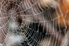 Na pająk sieci wodne krople Obraz Stock