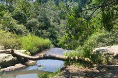 Na parte superior da cachoeira Foto de Stock Royalty Free