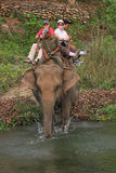 Na parte traseira de um elefante foto de stock