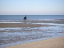 Na parte traseira do cavalo na praia Imagens de Stock