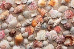 Na piasku denne skorupy Fotografia Stock