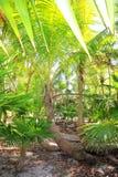 Na plażowym Caribbean terenie drzewko palmowe i karteczki dżungla Obrazy Royalty Free