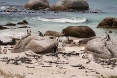 Na plaży afrykańscy pingwiny Obraz Stock