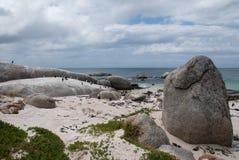 Na plaży afrykańscy pingwiny Obrazy Royalty Free
