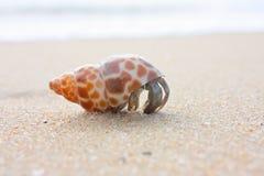 Na plaży eremita krab obraz royalty free