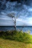 Na plaży nieżywy drzewo Obraz Royalty Free