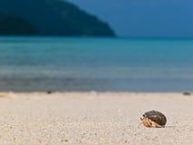 Na plaży eremita krab Zdjęcia Royalty Free