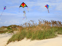 Na Plaży kani Latanie Fotografia Stock