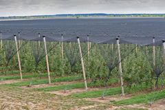 Na plantação da árvore de maçã na Sérvia imagens de stock royalty free