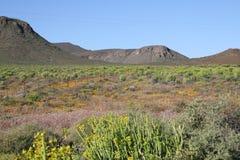 na południe od afrykanów krajobrazowi Obraz Royalty Free