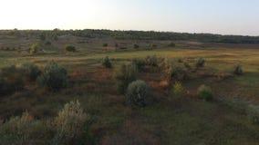 Na polu pasa małego stada krowy Airview zbiory