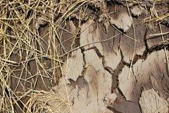 Na porze suchej krekingowa ziemia Zdjęcie Stock
