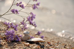 Na praia Foto de Stock Royalty Free