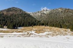 Na primavera, as neves começam a abrandar-se no esclarecimento no vale de Chocholowska Imagens de Stock