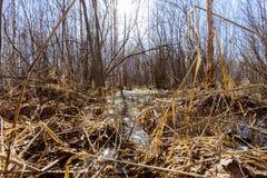 Na primavera floresta Foto de Stock