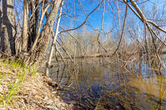Na primavera floresta Imagem de Stock Royalty Free