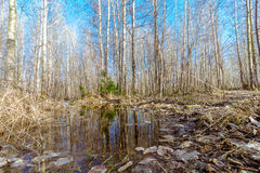 Na primavera floresta Fotografia de Stock Royalty Free