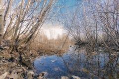 Na primavera floresta Fotografia de Stock