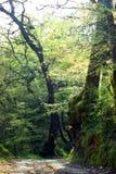 Na primavera floresta Fotos de Stock Royalty Free