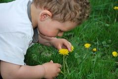 O menino quer cheirar os dentes-de-leão Imagens de Stock