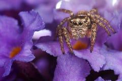 Na purpurowych kwiatach Fotografia Royalty Free