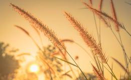Na ranek kwiat trawa Zdjęcie Royalty Free