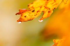 Na Regen Stock Foto