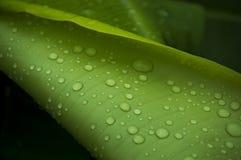 Na regenachtige dag Stock Afbeeldingen