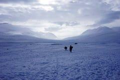Na região selvagem nevado Fotos de Stock