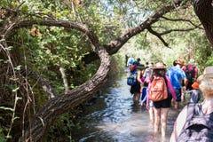 Na reserva natural de Betiha - o Majrasa Fotos de Stock