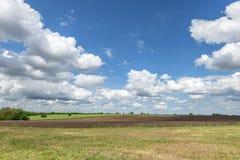Na słonecznym dniu piękna łąka Obrazy Royalty Free