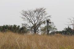 Na selva Fotografia de Stock