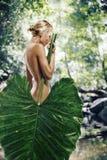 Na selva Fotografia de Stock Royalty Free
