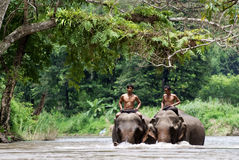 Na selva Imagem de Stock Royalty Free