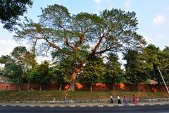 Na sposobie od Boyoke rynku Shwedagon pagoda Zdjęcie Stock