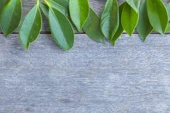 Na starym drewnie zielony Liść Zdjęcia Stock