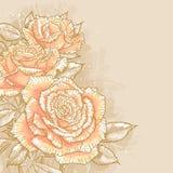 Na stonowanym tle różowe róże Fotografia Royalty Free