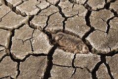 Na suchym lądzie nieżywa ryba Zdjęcie Royalty Free