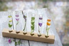 Na tabela, em flores e em plantas de madeira cinzentas velhas em uns tubos de ensaio no apoio de madeira em um fundo blury, foto de stock royalty free