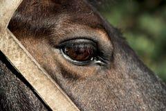 Na tle zielony bokeh las koński ` s oko rysujący w furze uzda supła obraz stock